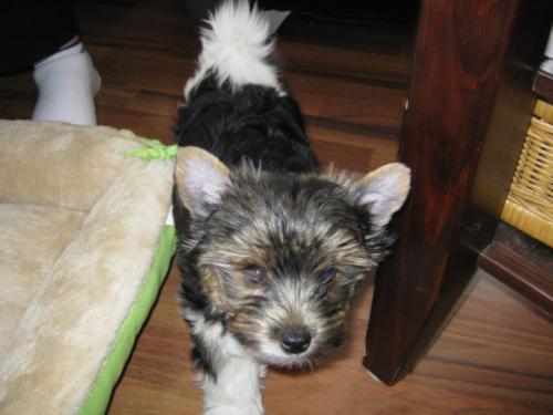 Sam 11 Wochen alt