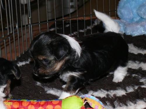 Sam 4 Wochen alt